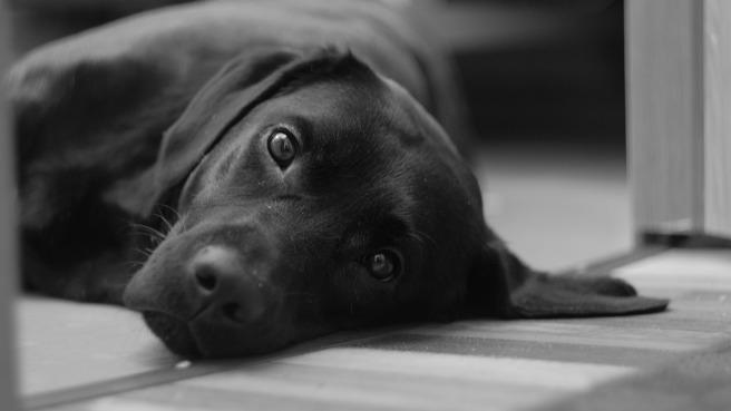 dog-3135777_1920