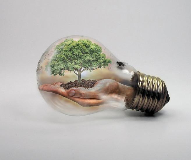 bulb-2368396_1920