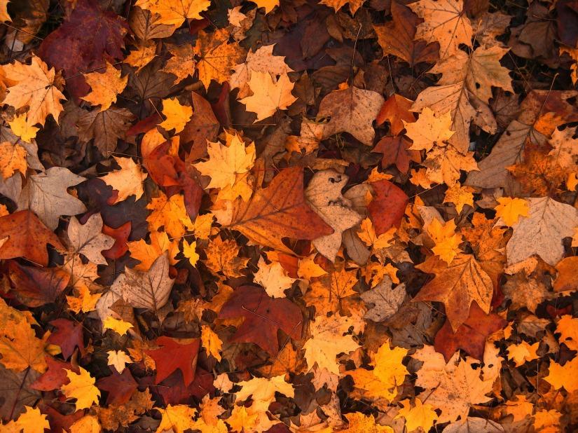 fall-foliage-111315_1920